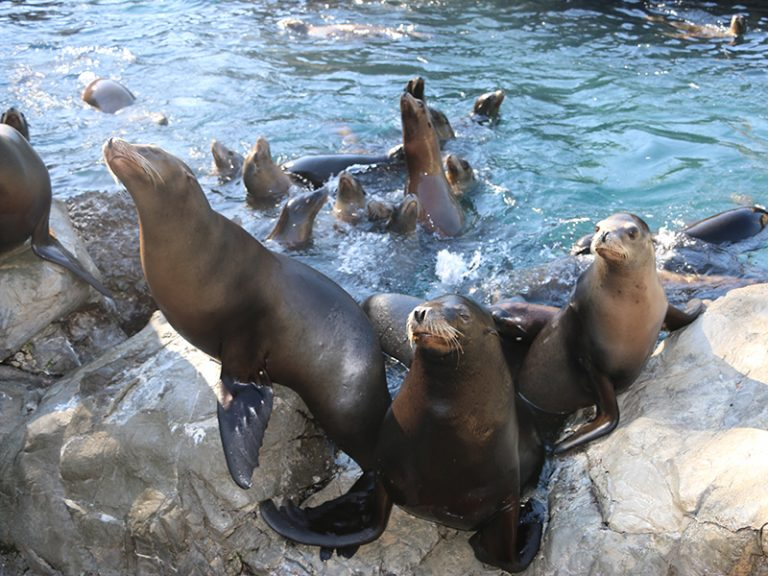 Zoo and Aquarium specialty wave applications powered by ADG wavetek technology