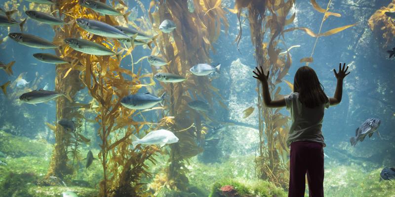 Kelp Aquarium Tank