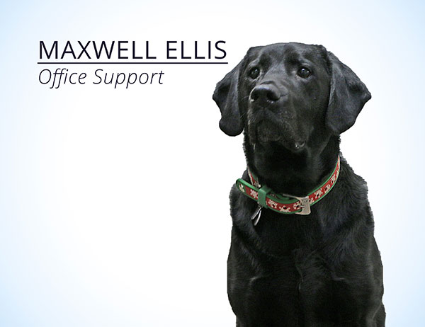 Maxwell Ellis : Office Support