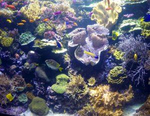 aquarium exhibit featuring live coral