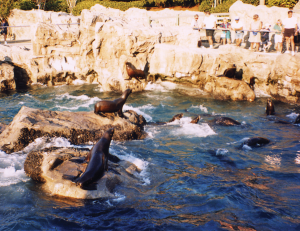 Seaworld Seal Exhibit