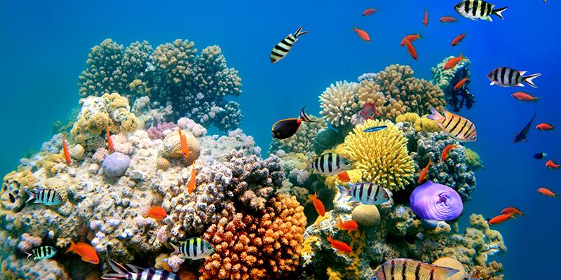 Coral aquatic exhibit