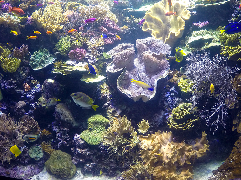 Coral Aquariums
